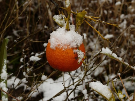 frosted-orange
