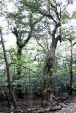 Miike Wild Bird Forest