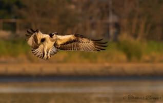 braked landing osprey
