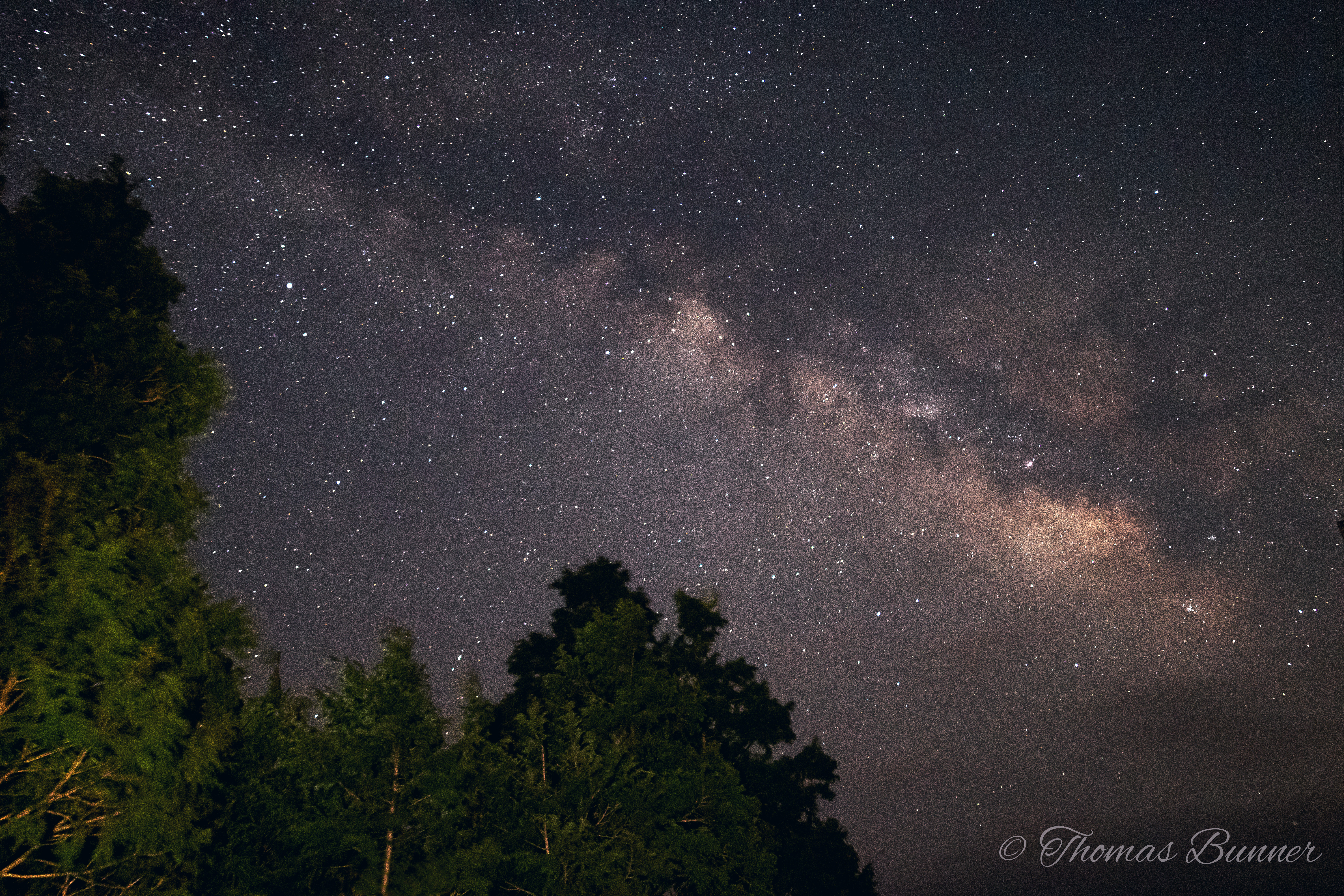 Milky way w- cedars watermarked